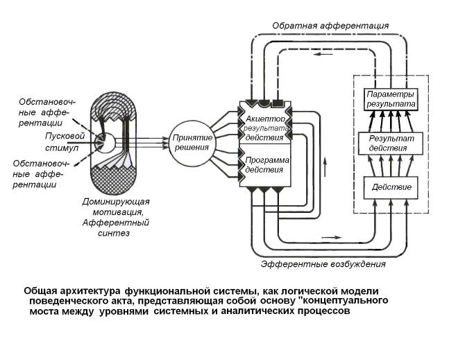 Схема функциональной системы.