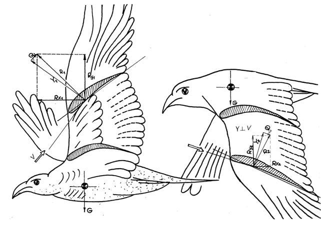 Схема сил махолёта